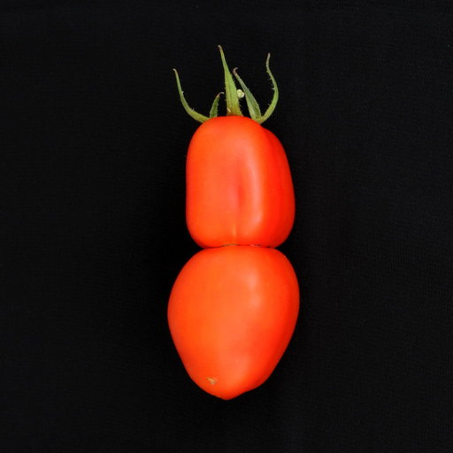 tomate_2009-09-06.jpg